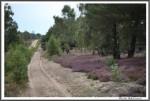 Heidekutschfahrt 280816 Caluna Way IMG 4504
