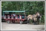 Heidekutschfahrt 280816 Der Kutscher Mit Gespann IMG 4441