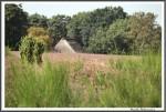Heidekutschfahrt 280816 Heide Flora U Fauna IMG 4425