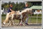 Bad Harzburg 090916 Classic Colando Rose IMG 5274