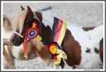 Bad Harzburg 090916 Estelle Hahn IMG 6441