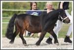 Bad Harzburg 090916 Lupo Hoppe IMG 4659