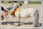 Bad Harzburg 090916 Manitu Heuer Engel IMG 6338