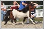 Bad Harzburg 090916 Nico Hoppe IMG 4656