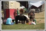 Bad Harzburg 090916 Ponys Muesli Mensch Xxl Chips IMG 4547
