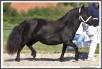 Bad Harzburg 100916 Black Chiffon Hashagen IMG 5842