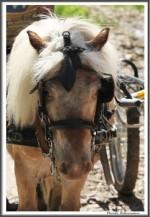 Kopie Von Fahrerlager Igs Gardelegen 270517  X IMG 0124