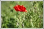 Kopie Von Fahrerlager Igs Gardelegen 270517 Blumen Am Weg IMG 0063