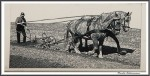 Pfluegen Mit Pferden Bei Peter Hagel  Riepe 290417 IMG 9310