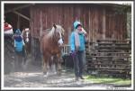 Pfluegen Mit Pferden Bei Peter Hagel  Riepe 290417 IMG 9319
