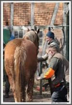 Pfluegen Mit Pferden Bei Peter Hagel  Riepe 290417 IMG 9322