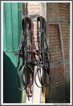 Pfluegen Mit Pferden Bei Peter Hagel  Riepe 290417 IMG 9324