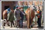 Pfluegen Mit Pferden Bei Peter Hagel  Riepe 290417 IMG 9325