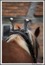 Pfluegen Mit Pferden Bei Peter Hagel  Riepe 290417 IMG 9336