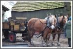 Pfluegen Mit Pferden Bei Peter Hagel  Riepe 290417 IMG 9346