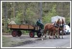 Pfluegen Mit Pferden Bei Peter Hagel  Riepe 290417 IMG 9349
