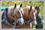Pfluegen Mit Pferden Bei Peter Hagel  Riepe 290417 IMG 9359