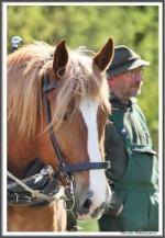 Pfluegen Mit Pferden Bei Peter Hagel  Riepe 290417  X IMG 9359