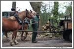 Pfluegen Mit Pferden Bei Peter Hagel  Riepe 290417 Einspannen Allein IMG 9345