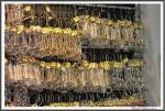 Nordpferd 21.04.17 Da Koennte Ein Passendes Gebiss Dabei Sein IMG 9416
