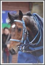 Bremer Galopprennen Mit Shetty 300318 IMG 0451