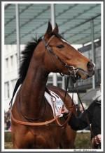 Bremer Galopprennen Mit Shetty 300318 IMG 0459