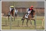 Bremer Galopprennen Mit Shetty 300318 IMG 0512