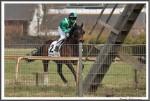 Bremer Galopprennen Mit Shetty 300318 IMG 0514