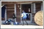 Bremer Galopprennen Mit Shetty 300318 IMG 0761