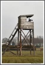 Bremer Galopprennen Mit Shetty 300318 Foto Film Turm IMG 0422