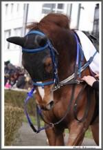 Bremer Galopprennen Mit Shetty 300318 Masken IMG 0466