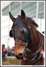 Bremer Galopprennen Mit Shetty 300318 Masken Und Gebisse IMG 0472