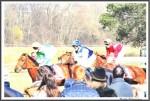 Bremer Galopprennen Mit Shetty 300318 See The Tiger Mit Jockey Andrasch Starke Gruen IMG 0781