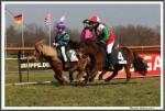 Bremer Galopprennen Mit Shetty 300318 Shetty Das Rennen IMG 0686