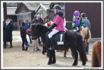 Bremer Galopprennen Mit Shetty 300318 Shetty Genco Mit Charlene Beckmann IMG 0560