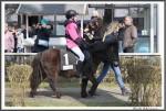 Bremer Galopprennen Mit Shetty 300318 Shetty Genco Mit Charlene Beckmann IMG 0599