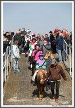Bremer Galopprennen Mit Shetty 300318 Shetty Zack Vorbei Das Rennen IMG 0698