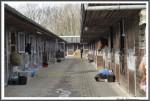 Bremer Galopprennen Mit Shetty 300318 Stallungen IMG 0413