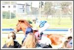 Bremer Galopprennen Mit Shetty 300318 Sun Son Mit Jockey Marco Casamento IMG 0789
