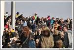 Bremer Galopprennen Mit Shetty 300318 Vom Rennen Zuirueck Zum Wiegen IMG 0616