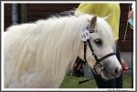 Stuteneintragung Adelheitsdorf 170618 Imke Mueller Pony IMG 2878