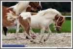 Igs Bad Harzburg 082017 Hilleke Tiponis Winona IMG 9198