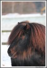 Sambuco Mammut 022012 IMG 8704