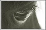 Impressionen Skusa V L L 270914  Grau IMG 6047